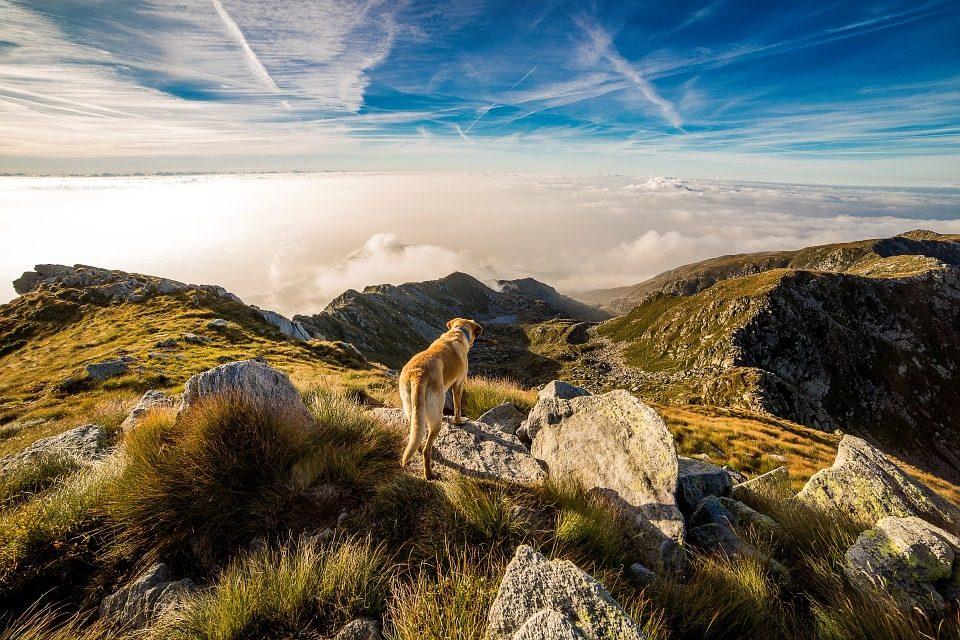 Best Dog GPS Tracker - Post Thumbnail